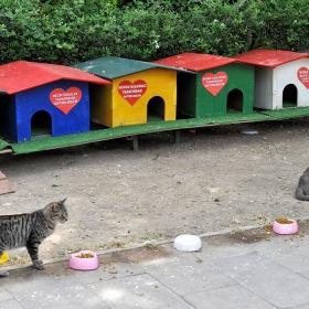 Котешки живот ....