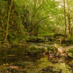 Река Младежка и един померан