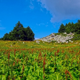 Витошки пейзаж 2