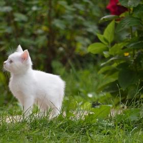 08.08.2018 г. - Международен ден на котката