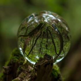 Чудесата на природата