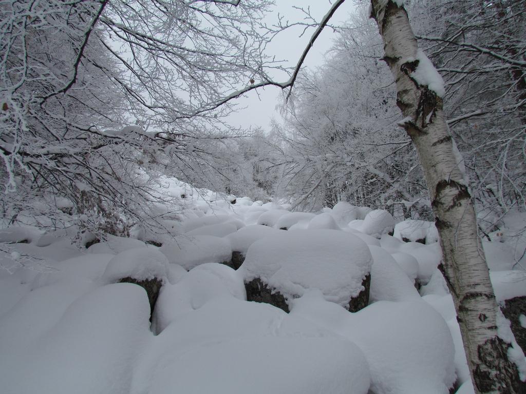 снежец