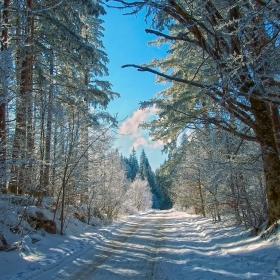 Пътят за х.Тинтява