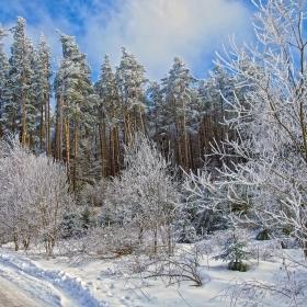 Зимен пейзаж 2
