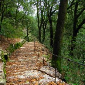 По горската пътека