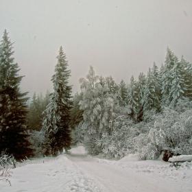 Витоша - към Кумата