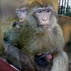 Майка с двете й деца