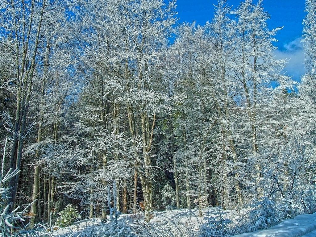 Замръзналата гора