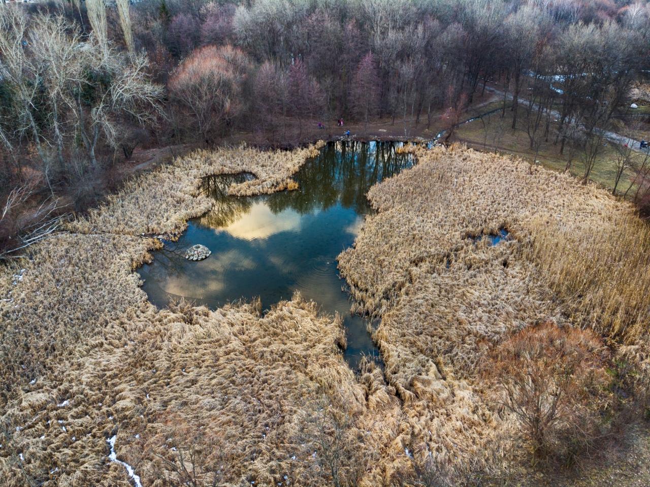 Езеро в Южния парк