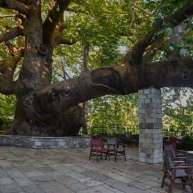 1200-годишен чинар*, Tsagarada, Pelion