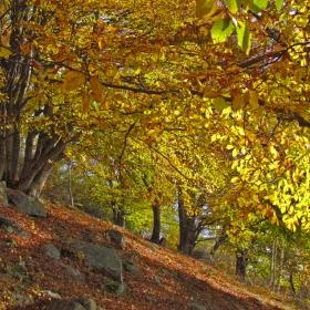Есен, есен...