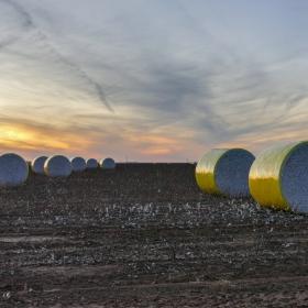 Памуковите полета на западен Тексас