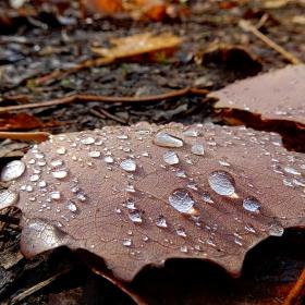Есенна роса