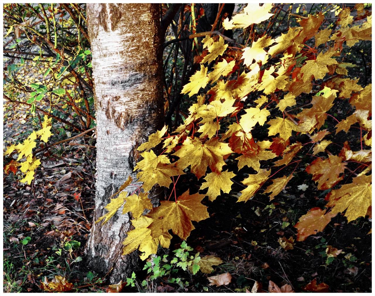 Есенна импровизация
