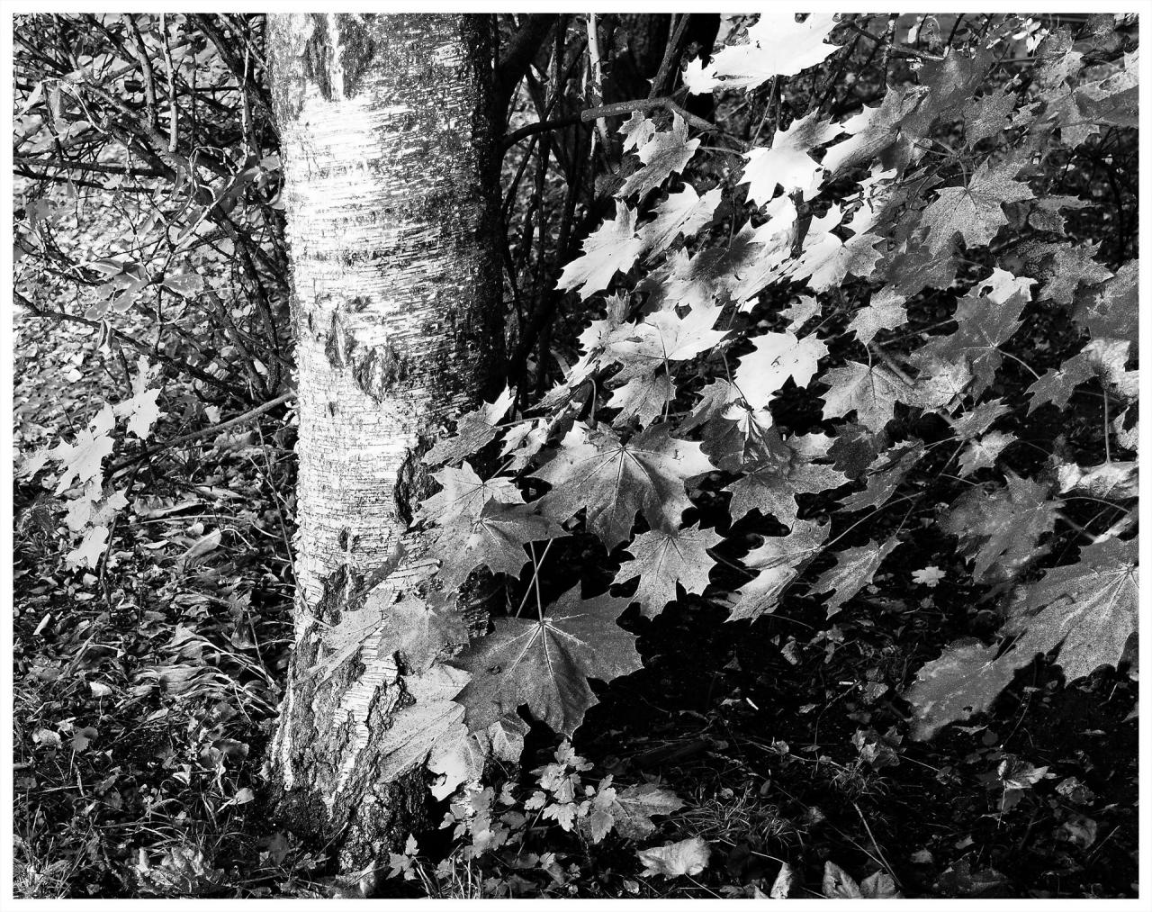 Чернобяла есен