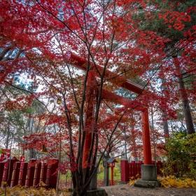 Есен в Хокайдо