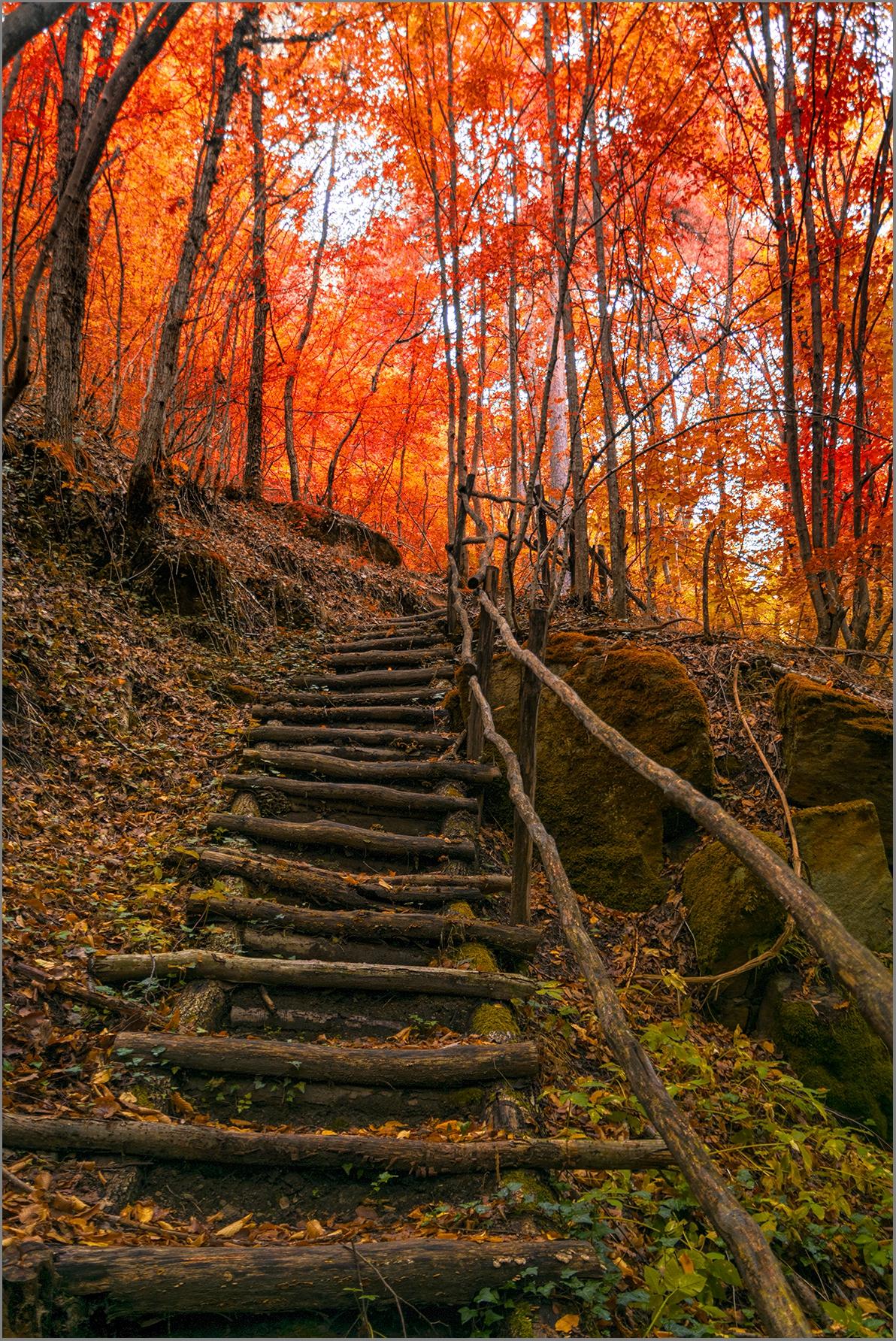 Стълба в гората