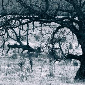 Закрилникът на поваленото дърво