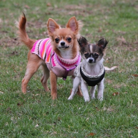 Кая и Мия на разходка