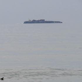 Островът и патицата