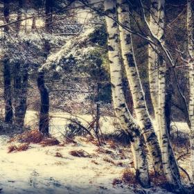 Заснежена гора