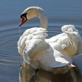 Голямата красива птица...