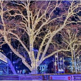 Светещо дърво