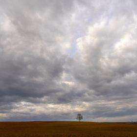 Мартенско поле