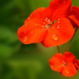 Цъфнало цвете