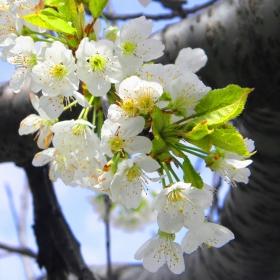 От пролетта