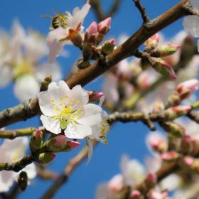 Цветовете на пролетта