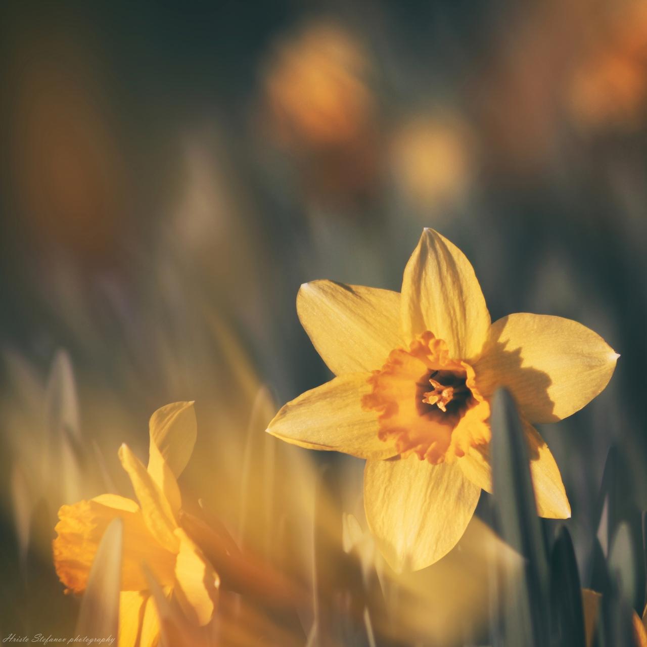 Парченце пролет