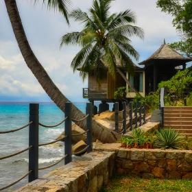 Tropical Dream...