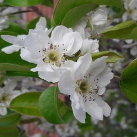 Пролетта настъпи