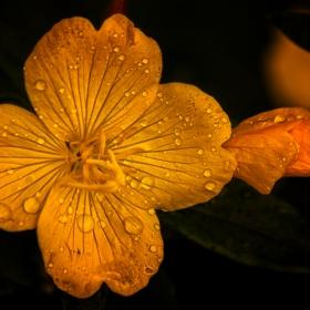В дъжда