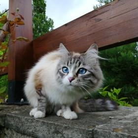 Честни сини очи