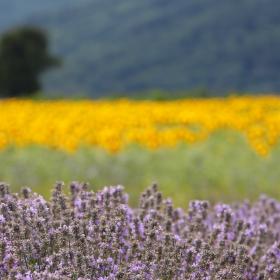 Български поля