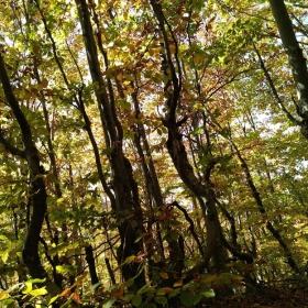 Есенна гора-Белинташ
