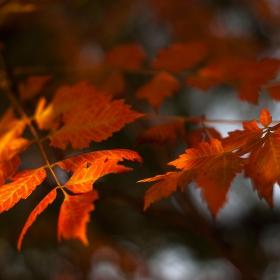 цвят Октомври