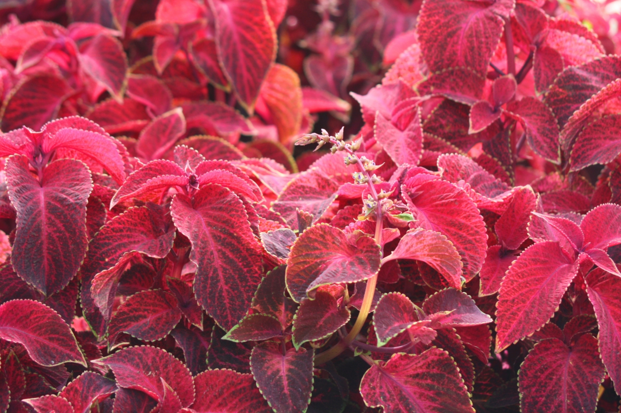 Есенни цветове