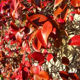 Есенни слънца