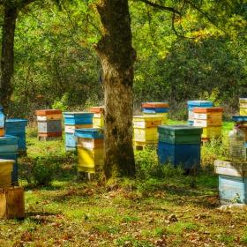 Пчелин в гората