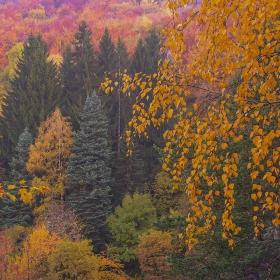 Пищна есен