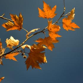 Есенна мечта