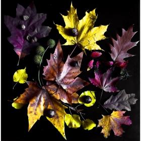 Есен в рамка.
