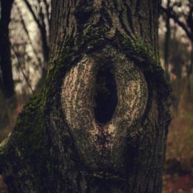 Дървото гледа