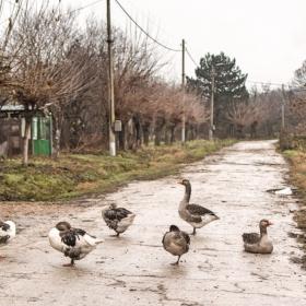 На село