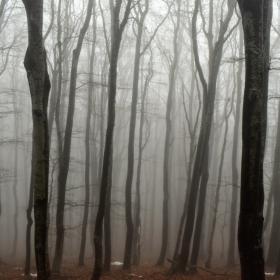 В мъглата