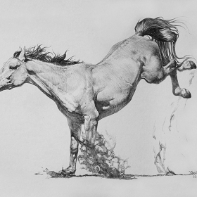The playing horse