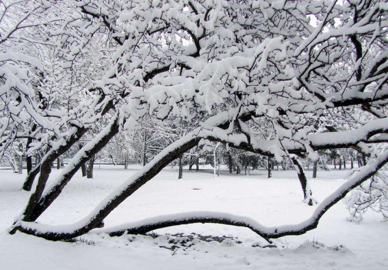 закъсняла зима
